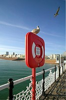 England, East Sussex, Brighton, A seagull on top of a life belt box on Brighton Pier looking back towards the seafront.