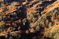 England, Cumbria, Holm Fell, Autumn over Holm Fell.