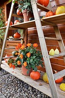 Etagere with dahlia and pumpkins  Design: Marianne and Detlef Lüdke