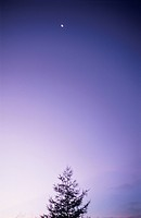 Silhouette of a Tree at Dawn. Mt Kuruma plateau, Nagano Prefecture, Japan