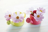 Cosmos flowers in watering can shaped vases