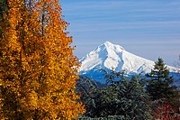 oregon cascades, oregon, united states of america, mount hood and the trees in autumn
