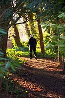 northumberland, england, a person walking down a path through the forest