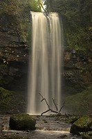 Wales, Powys, Henrhyd Falls, Henrhyd Falls, the highest waterfall in the Brecon Beacons National Park at 90 ft high