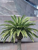 Palm tree outside The DeYoung Fine Art Museum in San Francisco, California