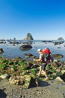 olympic national park, washington, united states of america, a man backpacking along the coast