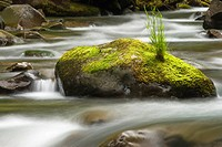 Rushing water in Sol Duc river, Olympic National Park, Washington