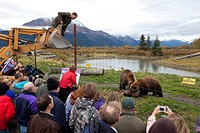 Mike Miller, Owner of the Alaska Wildlife Conservation Center, leans over his front loader after feeding a road killed moose to the Brown bears while ...