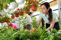 Customers choosing plants in a greenhouse