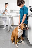 Boy stroking a dog with a vet in the background