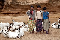 Bedouin kids taking care of the goats
