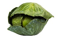 Close_up of a green cabbage