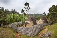 Huts of the Dorze people in the Guge Mountains of Ethiopia with groves of cooking banana, enset  The tribe of the Dorze is living high up in the Guge ...