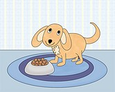 Dog with bowl of dogfood