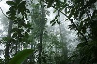 Cloudy forest, Henri Pittier National Park, Venezuela
