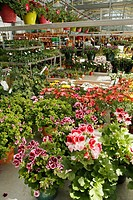 Garden Center  Luchon  France