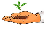 A small seedling in a hand