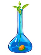 A plant growing in a science flask