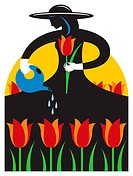 A woman watering flowers at a tulip festival (thumbnail)