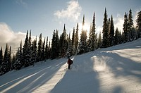 Canada, BC, Sun Peaks Ski Resort  Skier on freshly groomed ski run