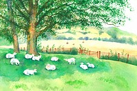 Animal, Watercolor painting of goats resting on the lawn