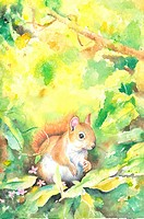 Animal, Watercolor painting of a squirrel