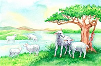 Animal, Watercolor painting of a group of lambs resting on riverside