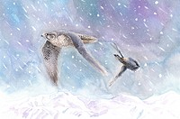 Animal, Watercolor painting of two bird flying in the snow