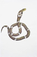 Chinese Fine art, Traditional Chinese Painting, Year Of The Snake