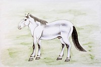 Chinese Fine art, Traditional Chinese Painting, Year Of The Horse