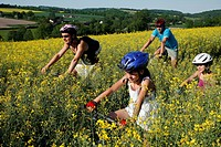 MOUNTAIN BIKING WITH THE FAMILY IN A COLZA FIELD BETWEEN MAROLLES_LES_BUIS AND COUDRECEAU, PERCHE NEAR NOGENT_LE_ROTROU, EURE_ET_LOIR 28, FRANCE