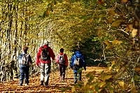 WALKERS ON A CARPET OF AUTUMN LEAVES IN THE FOREST OF SENONCHES, EURE_ET_LOIR 28, FRANCE