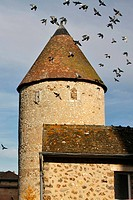 PIGEONS FLYING ABOVE THE KING´S TOWER, AN OLD 13TH CENTURY KEEP, BONNEVAL, EURE_ET_LOIR 28, FRANCE