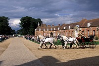 TEAM OF PERCHERON HORSES, LE PIN STUD FARM, ORNE 61, NORMANDY, FRANCE