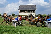 HORSES AT THE FINISH LINE, RACES AT THE HIPPODROME OF MOULIN LA MARCHE, ORNE 61, NORMANDY, FRANCE