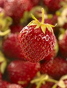 Sweet juicy strawberry in heap over unfocused background