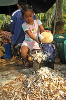PREPARATION OF THE COCONUTS. THE DRIED PULP, THE COPRA IS USED IN MAKING OIL IN GREAT QUANTITIES DESTINED FOR THE FOOD INDUSTRY, MOSTLY IN ASIA. COPRA...