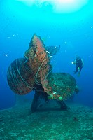 Diver at Propeller of HIJMS Nagato Battleship, Bikini Atoll, Micronesia, Pacific Ocean, Marshall Islands