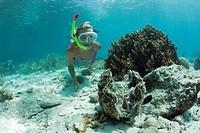 Giant Clam and Diver, Tridacna Squamosa, Micronesia, Palau