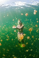Skin Diving with harmless Jellyfish, Mastigias papua etpisonii, Jellyfish Lake, Micronesia, Palau
