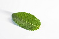 Mint leaf