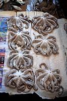 Tanzania, Zanzibar Unguja island, Zanzibar city, market of Stone Town, octopus.