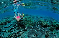 Snorkeling near an island Scin diver split image, South chinese sea, Malaysia Pulau Tenggol