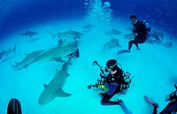 Lemon Sharks and Underwater Photographer, Negaprion brevirostris, Grand Bahama Island, Atlantic Ocean, Bahamas