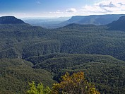 Canyon in the blue mountains