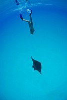 Woman swimming with Manta, Manta birostris, Raja Ampa, West Papua, Indonesia
