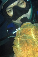 Diver observes Giant Frogfish, Antennarius commersoni, Dumaguete, Negros, Visayan Sea, Philippines