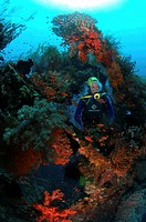 Liberty Wreck and Diver, Tulamben, Bali, Indonesia