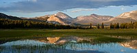 Reflection of Mount Dana in flooded field, Tuolumne Meadows, Yosemite national park, California