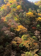 autumn foliage in the mountain